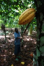 ADM celebrates five years commitment to Ghana's cocoa industry