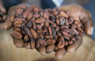 Cargill and Mondelēz team up on Indonesia cocoa sustainability