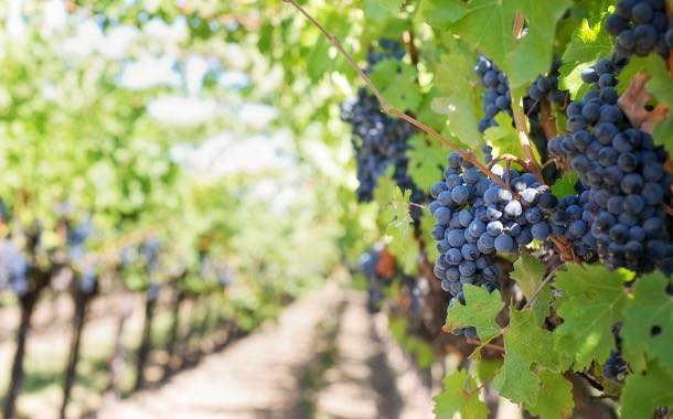 Fetzer Vineyards expects to use 25% less water with new setup