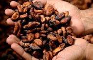 'Sustainable production key to future of cocoa industry' – study